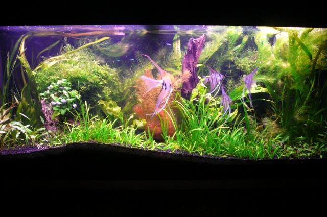 Aquarium 240L quelques questions P1070811