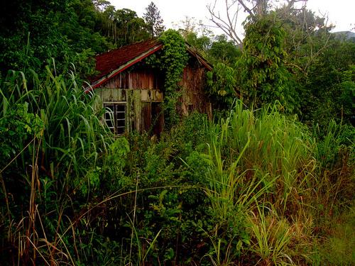 A Casa Abandonada Casa_a10