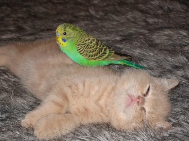 thread sull'AMICIZIA tra specie diverse Image018