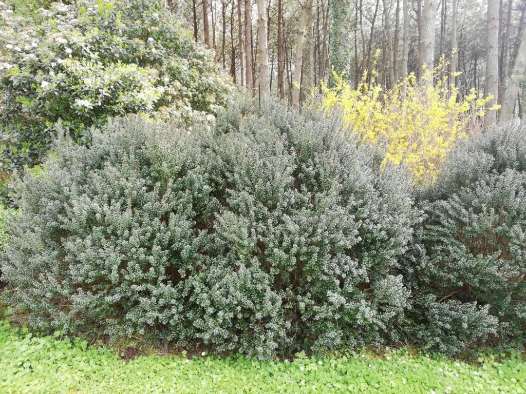 Quel sont ces arbustes ? 16230110