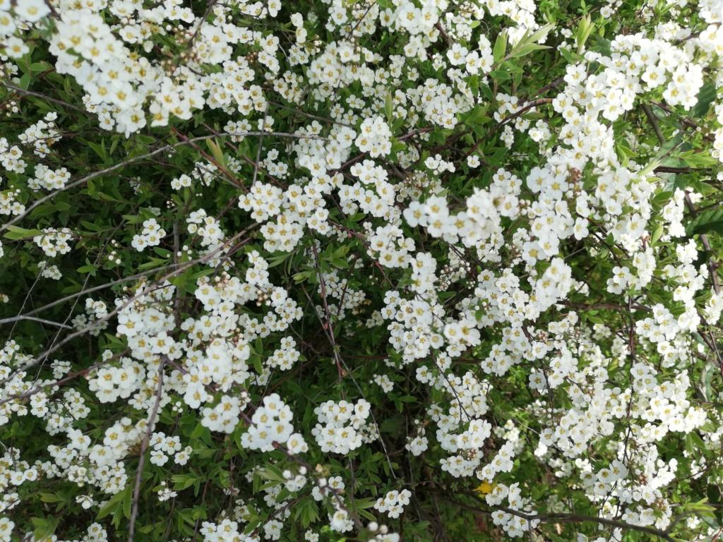 Quel sont ces arbustes ? - Page 2 16239810