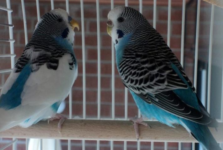 Roméo et Juliette - Mack et Flo 27000214