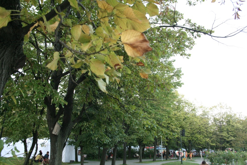 Floraisons du mois de septembre - Page 2 Paysag10