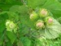 Энциклопедия лекарственных растений 12187110