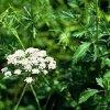 Энциклопедия лекарственных растений 12614710