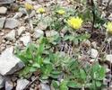 Энциклопедия лекарственных растений 126_3610