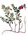 Энциклопедия лекарственных растений 2310
