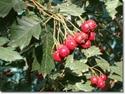 Энциклопедия лекарственных растений 27592910