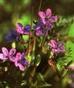 Энциклопедия лекарственных растений 392-210
