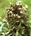 Энциклопедия лекарственных растений 393-110