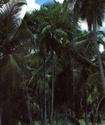 Энциклопедия лекарственных растений 394-110