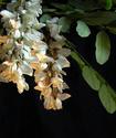 Энциклопедия лекарственных растений Akazbe10
