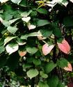 Энциклопедия лекарственных растений Aktini10