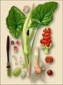 Энциклопедия лекарственных растений Aronni10