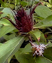 Энциклопедия лекарственных растений Atrakt11