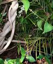 Энциклопедия лекарственных растений Ayahua10