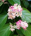 Энциклопедия лекарственных растений Ayahua11