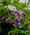 Энциклопедия лекарственных растений Bakaut11