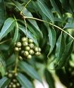 Энциклопедия лекарственных растений Barhat10