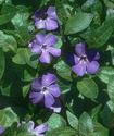 Энциклопедия лекарственных растений Barvin10