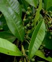 Энциклопедия лекарственных растений Bayder10