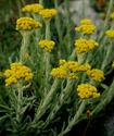 Энциклопедия лекарственных растений Bessme10