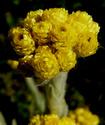 Энциклопедия лекарственных растений Bessme11