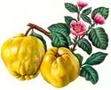 Энциклопедия лекарственных растений D090d012