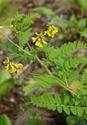 Энциклопедия лекарственных растений D0b0d111