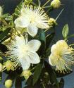 Энциклопедия лекарственных растений Kayapu10