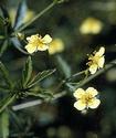 Энциклопедия лекарственных растений Lapcha11