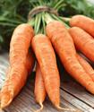 Морковь огородная Morkov11