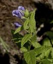 Энциклопедия лекарственных растений Shlemn11