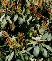 Энциклопедия лекарственных растений Yabora10