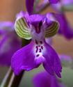 Энциклопедия лекарственных растений Yatrys10
