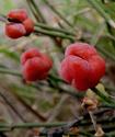 Энциклопедия лекарственных растений Yefedd11