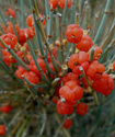 Энциклопедия лекарственных растений Yefedh11