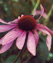 Энциклопедия лекарственных растений Yehina10