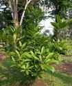 Энциклопедия лекарственных растений Yustiz10