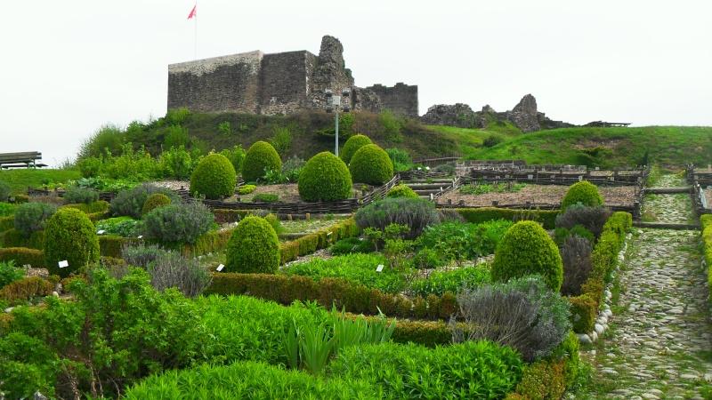 Travaux dans le Parc du Château et vieille ville - Page 2 Sdc13512