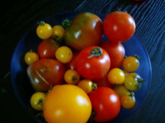Tomates - Page 6 Dsc00215