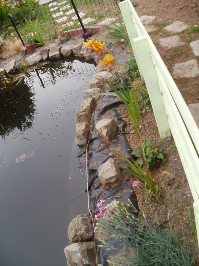 Mon bassin de 6000L - Page 11 P6050111