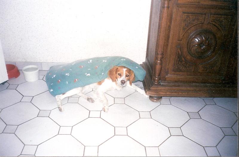 De chiot a chien? - Page 4 Prane_12