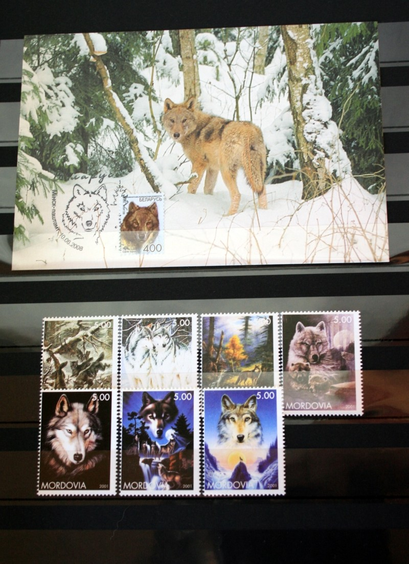 Husky`s und Wölfe  Unbena13