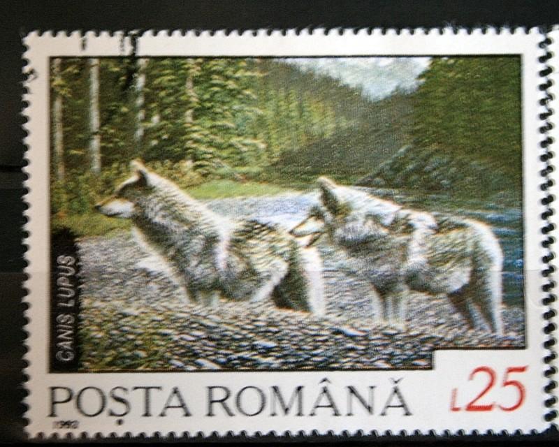 Husky`s und Wölfe  Unbena22