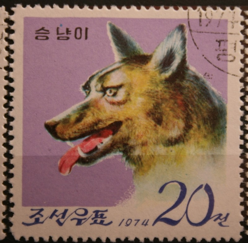 Husky`s und Wölfe  Unbena23