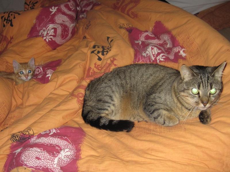 Ghost, petit chaton roux Img_3713