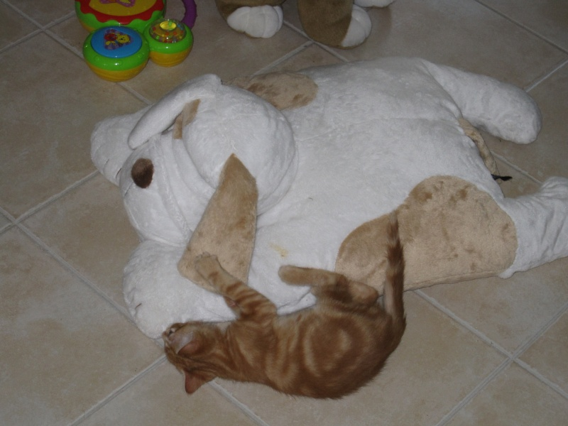 Ghost, petit chaton roux Img_3714