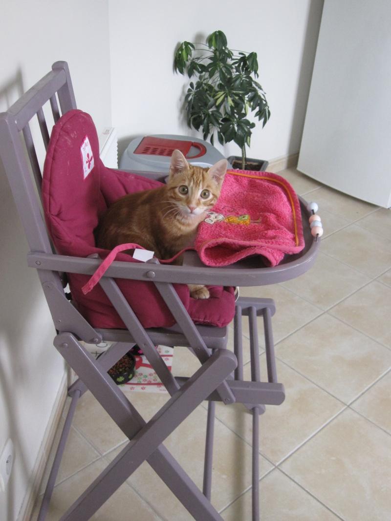 Ghost, petit chaton roux Img_3910