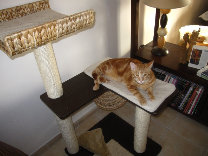Ghost, petit chaton roux Img_4310